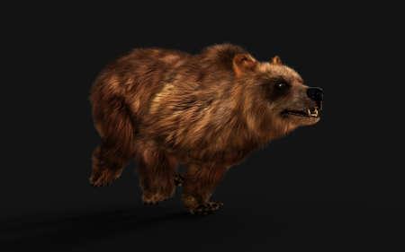 3d Illustration Large Brown Bear Posture isolated on Dark Background Reklamní fotografie - 154092499
