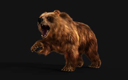 3d Illustration Large Brown Bear Posture isolated on Dark Background Reklamní fotografie - 154092504