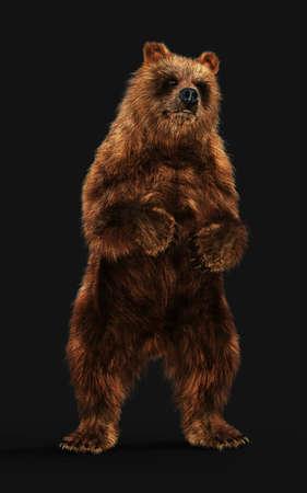3d Illustration Large Brown Bear Posture isolated on Dark Background