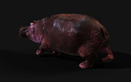 3d Illustration The Common hippopotamus (Hippopotamus Amphibius) posing isolate on dark background Reklamní fotografie - 156219434
