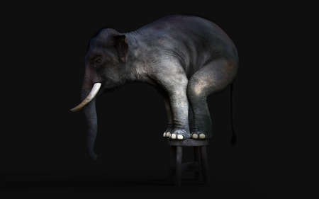 3d Illustration of an Elephant Standing on a small Stool isolated on Dark Black Background with Clipping Path. Reklamní fotografie