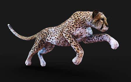 Cheetah Tiger Pose Isolated on Dark Background . 3d Illustration. Reklamní fotografie