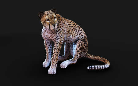 Cheetah Tiger Pose Isolated on Dark Background  . 3d Illustration.