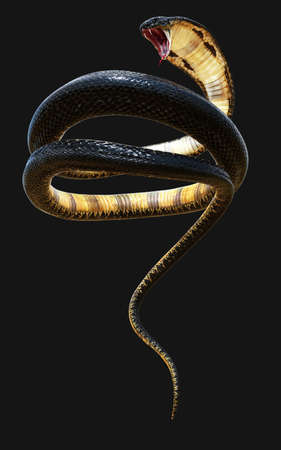 3d King Cobra The World's Longest Venomous Snake Isolated on White Background, King Cobra Snake, 3d Illustration, 3d Rendering Reklamní fotografie