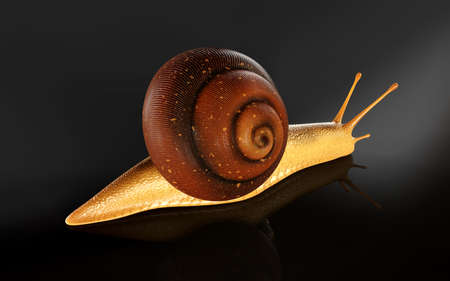 3d Illustration Burgundy or Edible Snail (Helix pomatia) is common big european land snail. Helix pomatia - edible snail