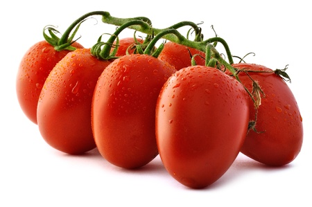 Bunch of Piccadilly tomatoes on white background. Piccadilly is a plum tomato variety. Plum tomatoes are full and rich in pulp. They are high in sugar content and do not burst on cutting so they can be sliced horizontally or across (producing cubes or rou