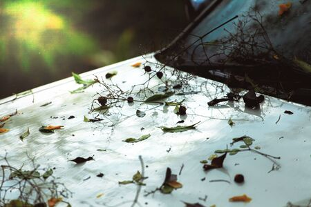 Dry leaves and dry twigs fall on the front of the car after the rain.