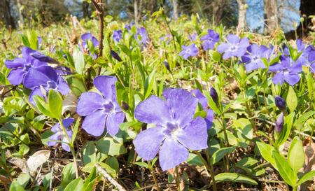 majors: Vinva flower