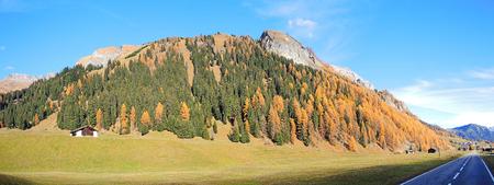 pinaceae: Splugen - Switzerland - Autumn trees Stock Photo