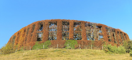 camouflaged: Camouflaged hut for hunting between plants and hedges with autumn colors. Orobie Alps.