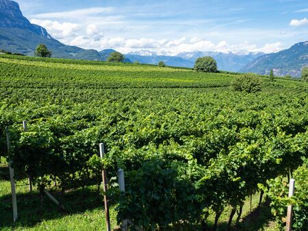 Amazing landscape at the vineyards of the Trentino Alto Adige in Italy. The wine route. Natural contest Banco de Imagens