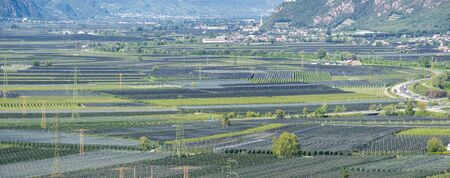 Landscape of fruit of apple and vine plantations in Trentino Alto Adige, North Italy. Green landscape. Natural contest. Intensive cultivations and plantations
