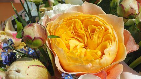 Amazing fresh orange peony close-up. Spring time. Vibrant color 写真素材