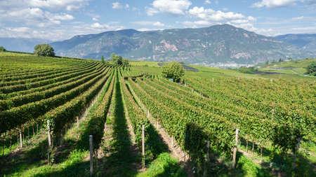 Amazing landscape view vineyards of the Trentino Alto Adige in Italy. Stock Photo