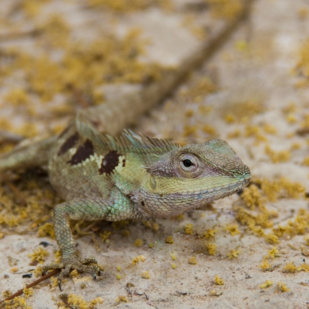 bugaboo: Life of small dragon in the forest  Stock Photo
