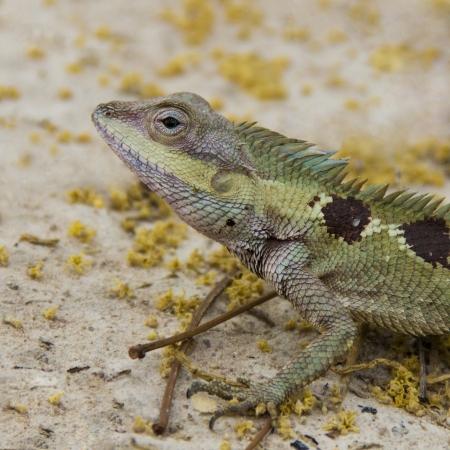 bugaboo: La vita del piccolo drago nella foresta Archivio Fotografico