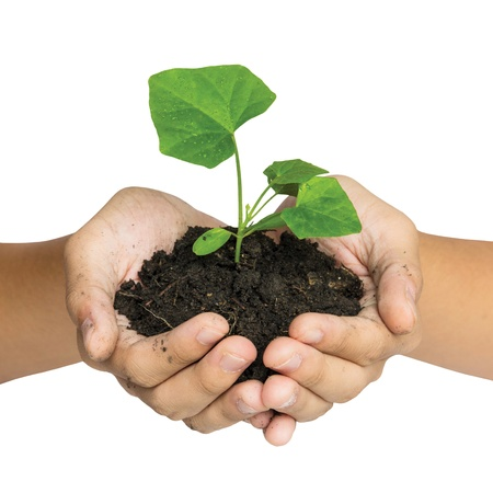 Hand holding a tree for giving life to the Earth isolated over white background Stock Photo