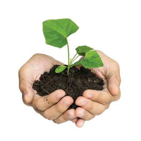 Hand holding a tree for giving life to the Earth isolated over white background Standard-Bild