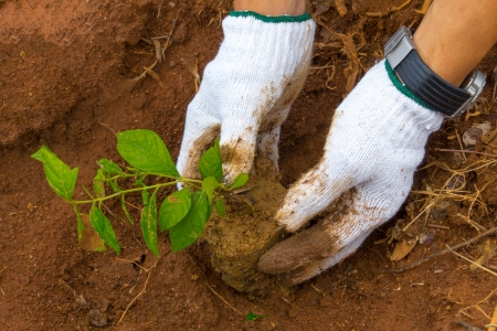 Growing a tree in the forest for giving life to the Earth (Think Earth) photo