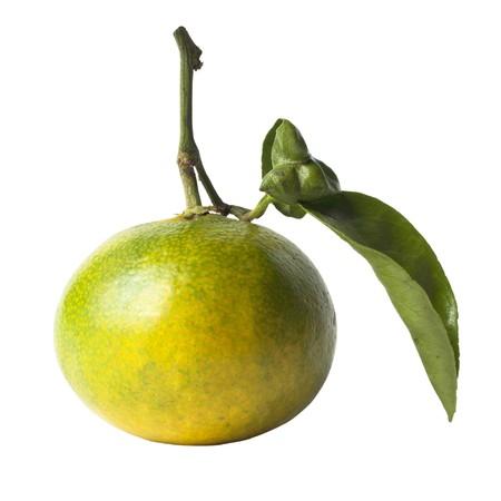 Miyagawa Mandarin