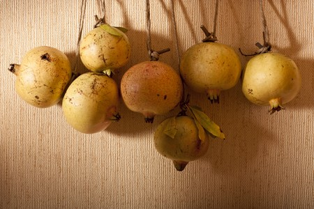 punica granatum: Hanging Yellow Pomegranates