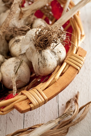 Just Plucked Garlic in a Wicker Basket on White Wood Stock Photo - 10233308