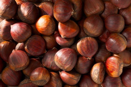 fagaceae: Many Chestnuts, Full Frame