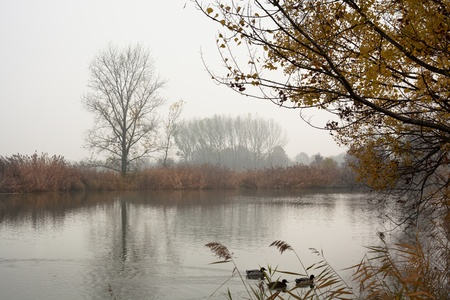 Autumn Trees and Ducks on Pond with Fog. Enzo Ferrari Park, Modena, Italy. photo
