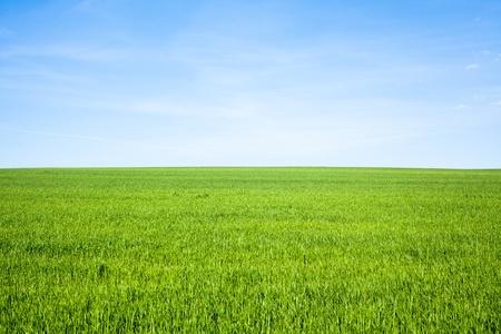 Lege grasveld met blauwe hemel Stockfoto