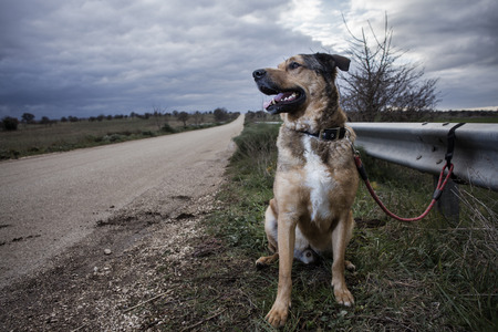 Abandoned Dog Tied with a leash at a Guard Rail