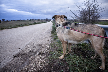 guard rail: Abandoned Dog Tied with a Leash on a Guard Rail