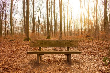 シュタインバッハタール・ネッツバッハタールの森の茶色の葉の木製ベンチ,ドイツ