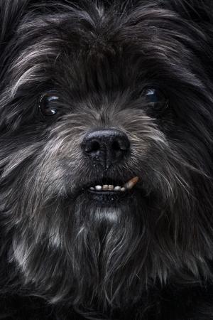 曲がった犬を持つ黒いモングレル犬の肖像