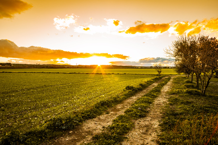 Sunset on a Country Field on Murge, Apulia, Italy