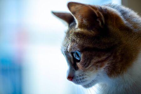 Orange Cat Profile with Window Background