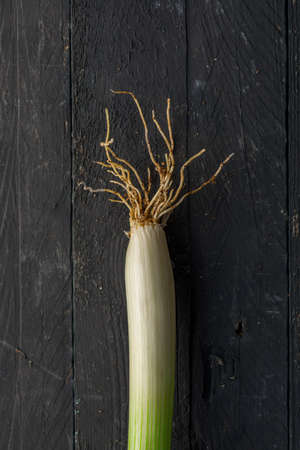 Sponsali, a Species of Leek from Apulia, Italy, on Black Wooden Table
