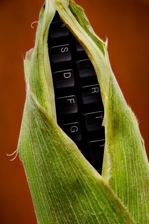 photomanipulation: corn and keyboard fusion Stock Photo