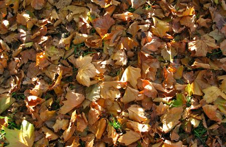 Shafts of morning sunlight fall on autumn leaves