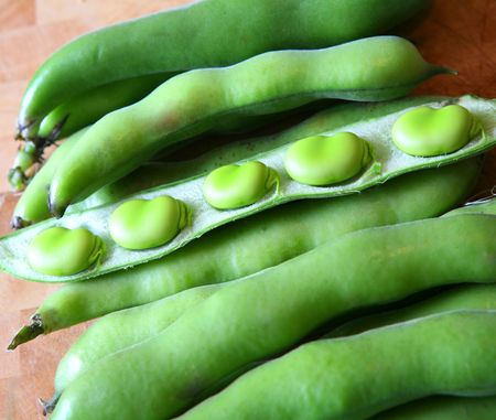 Fresh Broad Beans in their pods ready to eat