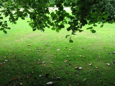 The view from under a leafy tree as autumn approaches.