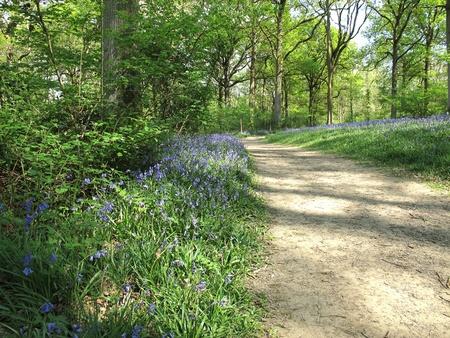 A woodland walk in spring sunshine
