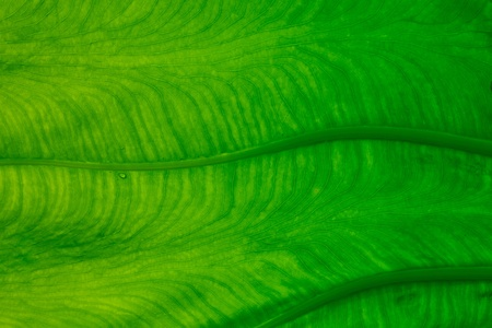 Stripes on the green leaves. Stock Photo - 10808575