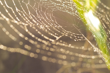 Water droplets on a spider web.