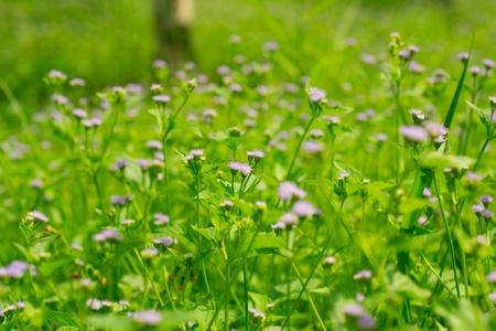 The flower of grass.