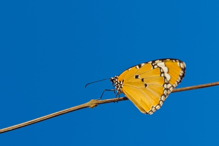 Butterfly on a yellow cast to the wood. On the background sky. Stock Photo
