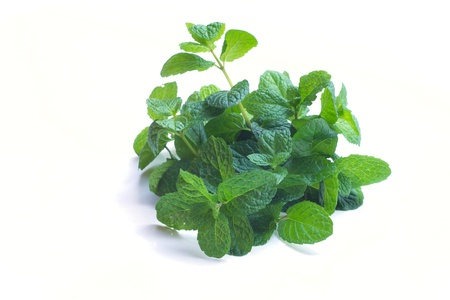 peppermint Stock Photo - 12004257