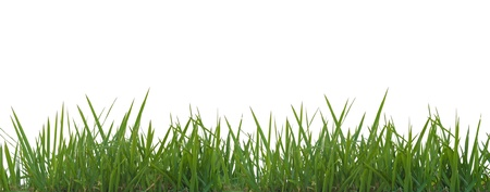 Fresh spring green grass panorama isolated on white background. Stock Photo - 12004252
