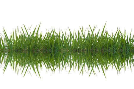 Grass reflection in the water. Stock Photo