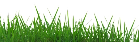 Fresh spring green grass panorama isolated on white background. Stock Photo - 12004253