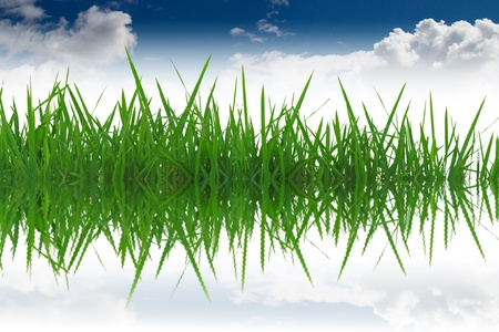 Grass reflection in the water. Stock Photo - 12004303